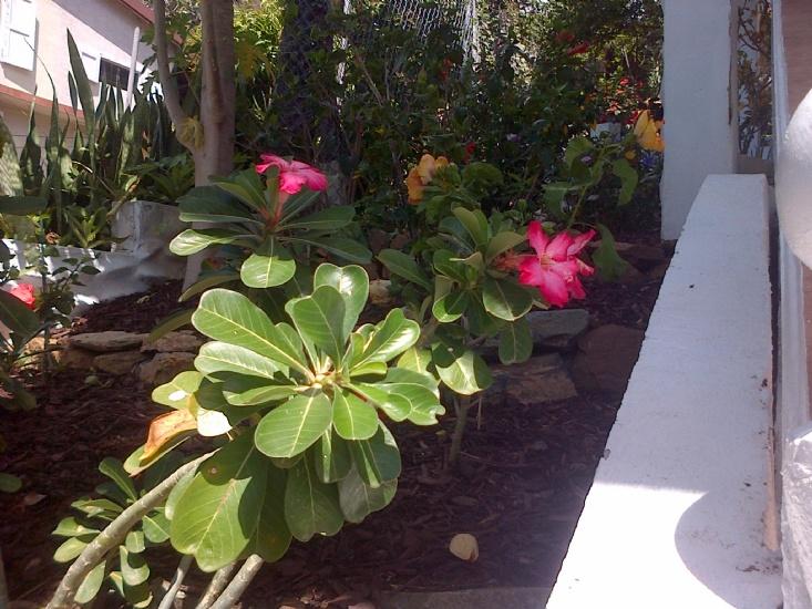 Creative Planters - Groundworks BVI
